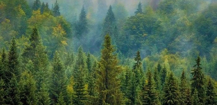 На проект «Сохранение лесов» выделено 8,6 млн рублей