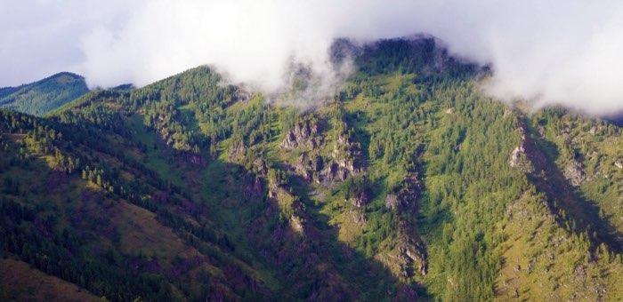 Границы лесов на Алтае быстро смещаются выше в горы