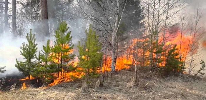 Жители республики устроили лесные пожары, собирая березовый сок и сжигая мусор на участке