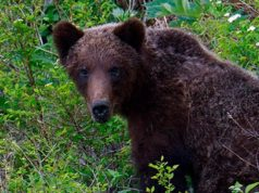 Встреча с молодым медведем