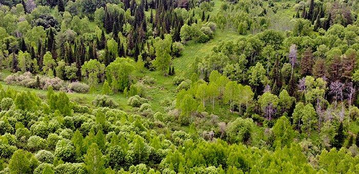 26 нарушений законодательства обнаружили инспекторы в ходе рейдов в лесах