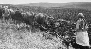 Сельское хозяйство Ойротии в годы Великой Отечественной войны