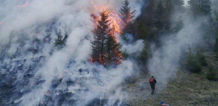 Из-за преступной небрежности местного жителя сгорело несколько гектаров леса