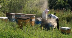 В Республике Алтай приняли закон о пчеловодстве и установили День пчеловода