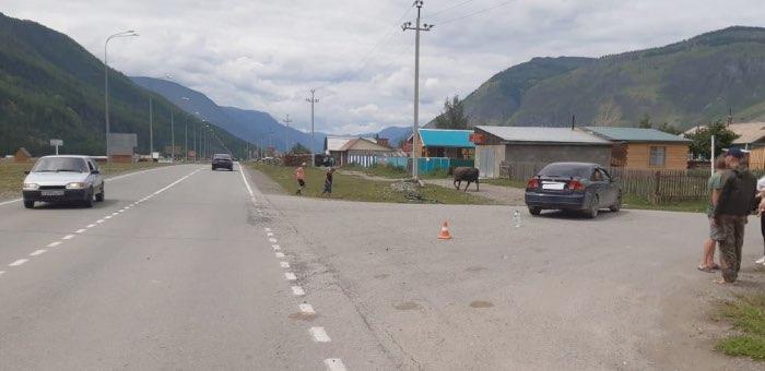 Автотуристка столкнулась с 10-летним велосипедистом на Чуйском тракте