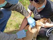 В Горно-Алтайске продолжается бесплатное чипирование собак