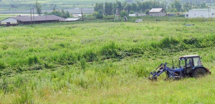 Более пяти гектаров дикорастущей конопли уничтожили в Карлушке