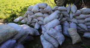 Свыше 13 тонн незаконно добытых краснокнижных растений изъяли пограничники в Горном Алтае