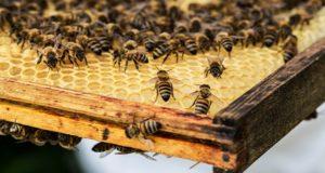 Пчелы в законе