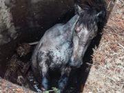 Пожарные спасли лошадь, попавшую в трехметровый колодец