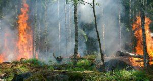 В двух районах Республики Алтай ожидается высокая пожароопасность