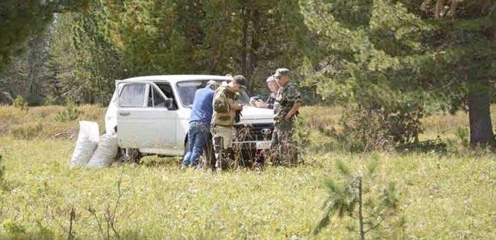 На Алтае начались рейды по пресечению незаконной заготовки кедрового ореха