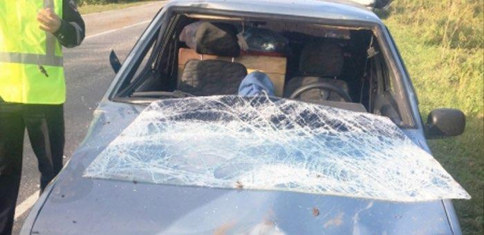 На Телецком тракте автомобиль столкнулся с лошадью