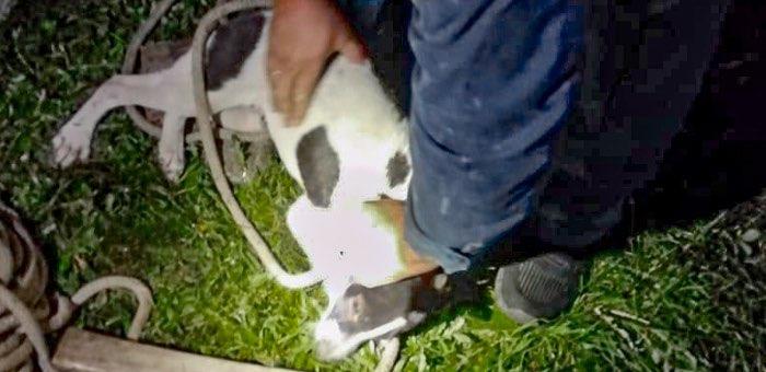 Чемальские пожарные спасли собаку