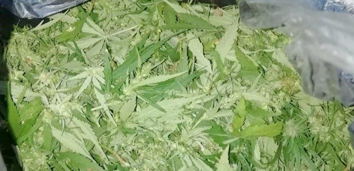 Больше килограмма марихуаны собрал житель Горно-Алтайска в урочище Кур-Кечу