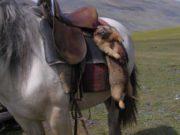 В Ховдском аймаке Монголии от чумы скончался 42-летний мужчина