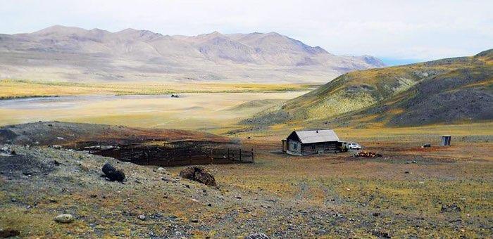 Около 140 сельхозпредприятий Кош-Агачского района получат поддержку на приобретение кормов