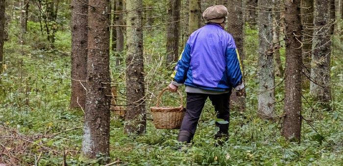 «Приключения» в лесу: одна женщина потерялась, вторая сломала ногу