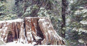 Дожди с мокрым снегом ожидается на Алтае в ближайшие дни