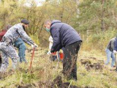 Около тысячи сеянцев кедра высажено во время акции «Сохраним лес»