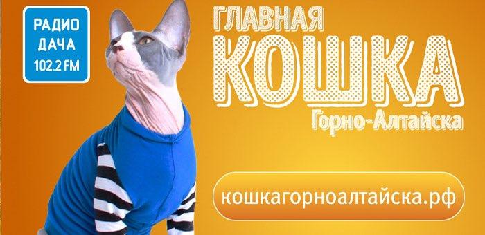 Стартовал конкурс «Главная кошка Горно-Алтайска»