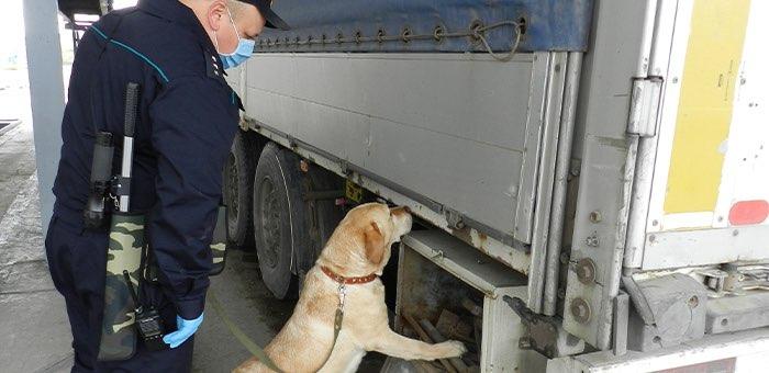 Что важно знать водителям международных грузовых транспортных средств