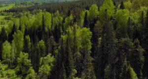 Почти 2 тысячи рейдов провели лесные инспекторы в этом году