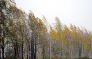 Штормовое предупреждение: на Алтае ожидается сильный ветер