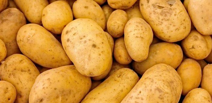 Более 200 тонн картофеля собрали осужденные в Республике Алтай