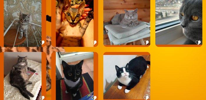 Определились все финалисты конкурса «Главная кошка Горно-Алтайска»