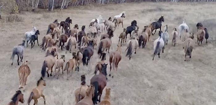 Трех тувинцев будут судить за кражу 22 лошадей в Кош-Агачском районе