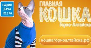 Очередные итоги конкурса «Главная кошка города»