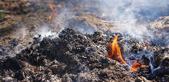 Выжигая сухую траву на участке, житель Чемальского района сжег почти 5 га леса