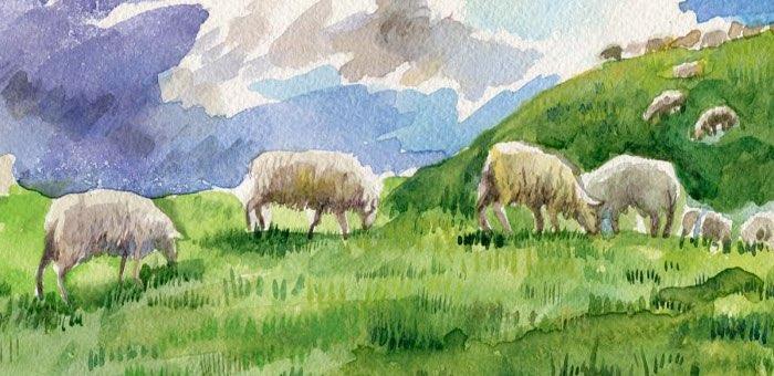 Самые древние домашние овцы на Алтае паслись в Каракольской долине