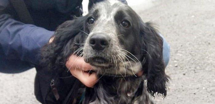 В Горно-Алтайске чипировали 372 собаки
