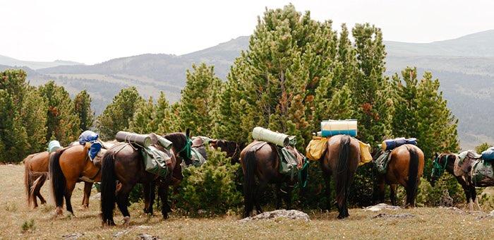Турпоток в Республику Алтай вырос на фоне пандемии