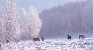 Прогноз погоды: в ближайшие дни снег, а в выходные - сильные морозы