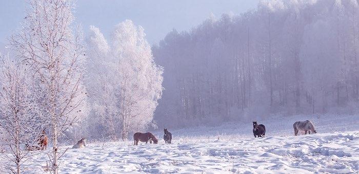 Прогноз погоды: в ближайшие дни снег, а в выходные — сильные морозы