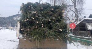 328 пихт срубил житель Иогача. Он планировал продать их в Горно-Алтайске