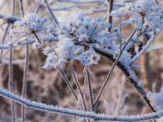 В ближайшие дни на Алтае ожидается теплая погода