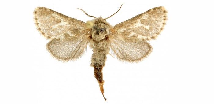 Новый вид бабочек, найденный на Алтае, назвали в честь бога Ульгеня