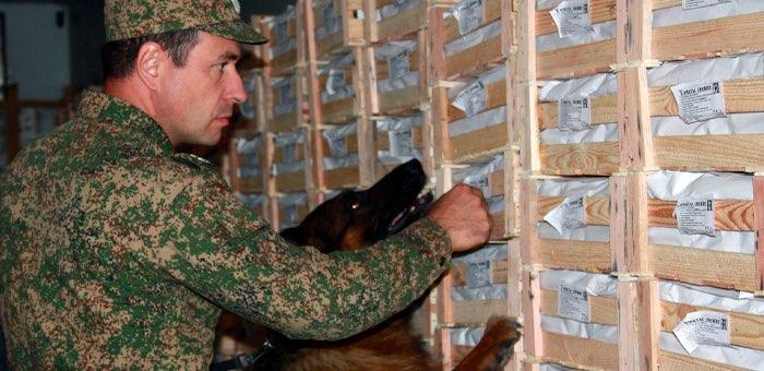 Как поработали служебные собаки Алтайской таможни в прошлом году