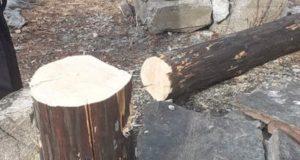 Полиция ищет вандалов, спиливших обрядовый столб в Чемальском районе