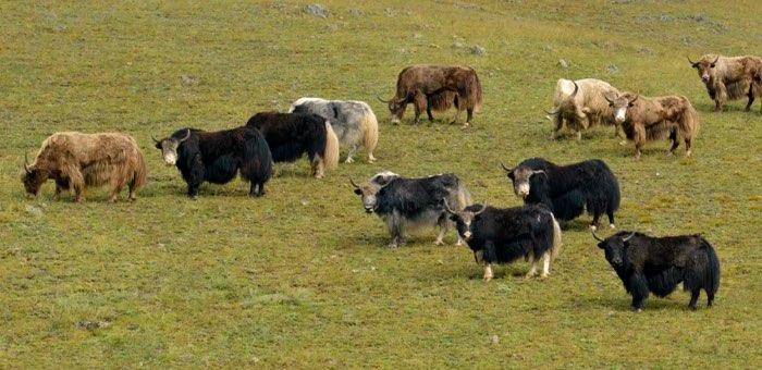 Как повысить продуктивность сельскохозяйственных животных