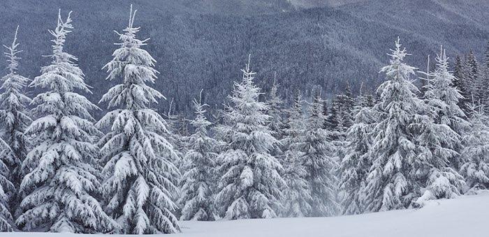 В конце недели ожидается снег и похолодание