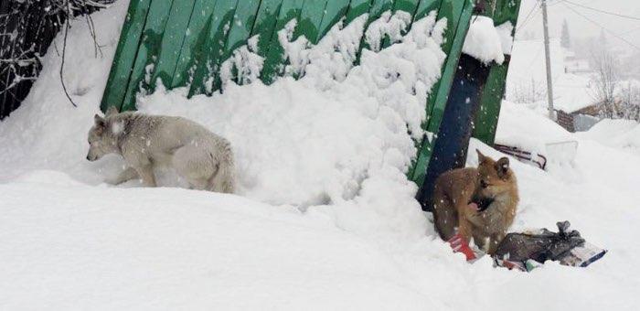 Безнадзорные собаки: кто виноват и что делать?