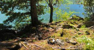На Алтае расчистят и обустроят туристские тропы