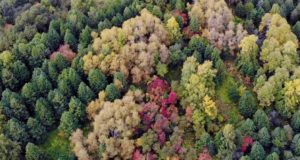В этом году пройдет лесоустройство в Турочакском и Чойском районах