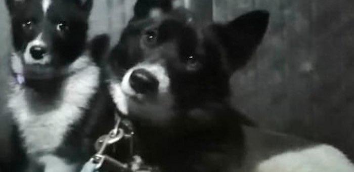 Застрелил из ружья в упор: в Чемале полиция ищет убийцу двух собак