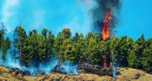 Республика Алтай готовится к борьбе с природными пожарами
